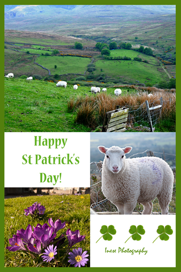 patrick_day_greeting_card