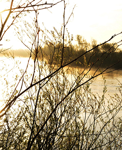 river_suir_spring
