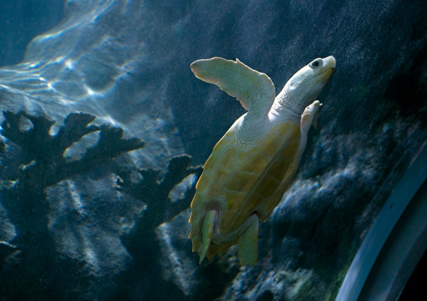 Living Planet Aquarium