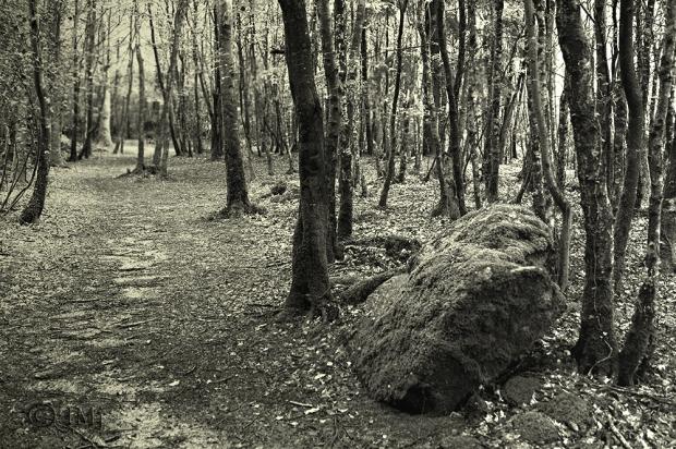 woods mono