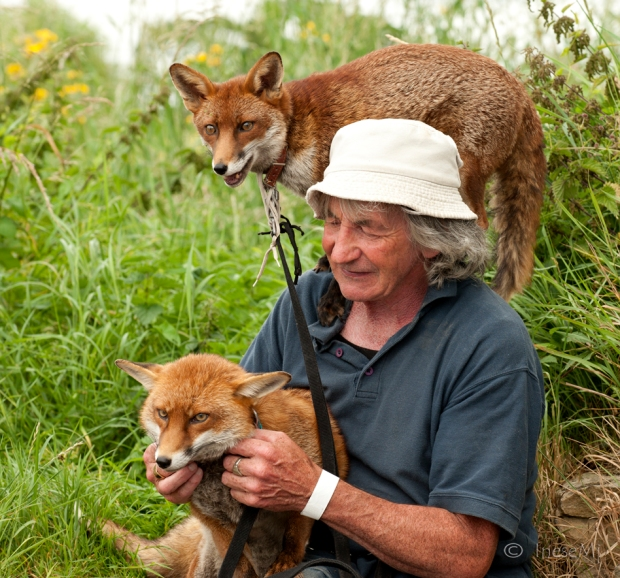 Pat Gibbons foxes