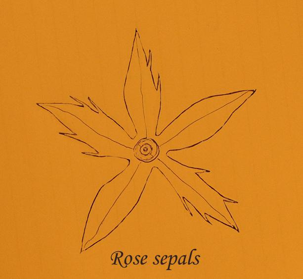 rose sepals