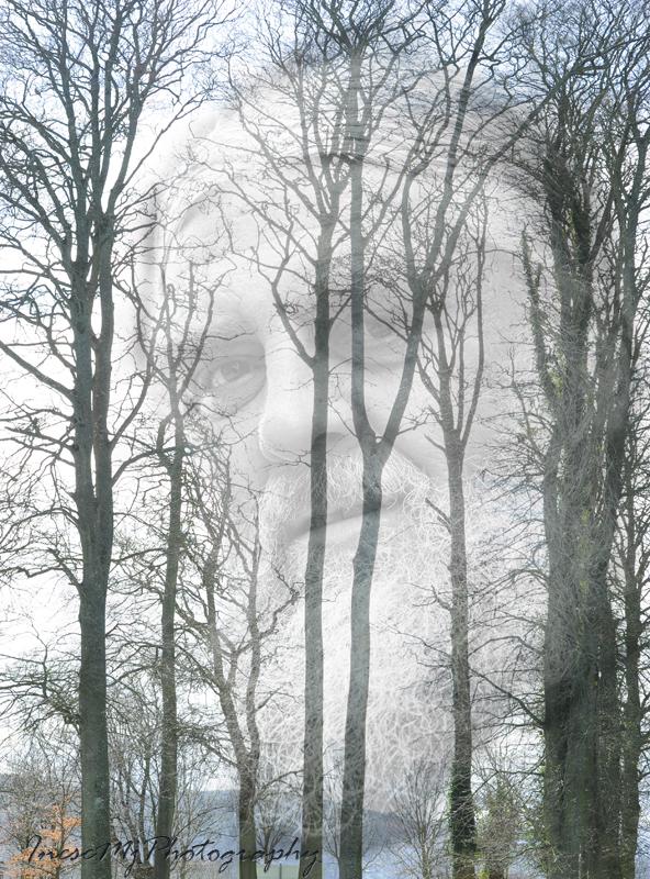 2015-03-20-tree 045cres