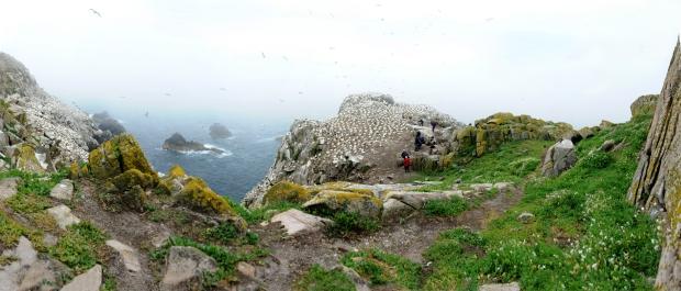Saltee_Islands