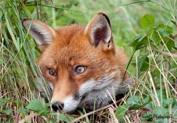 fox1 189