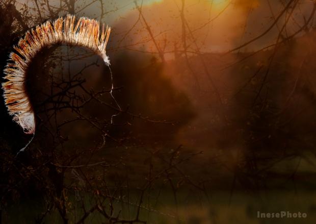 spirit of dusk