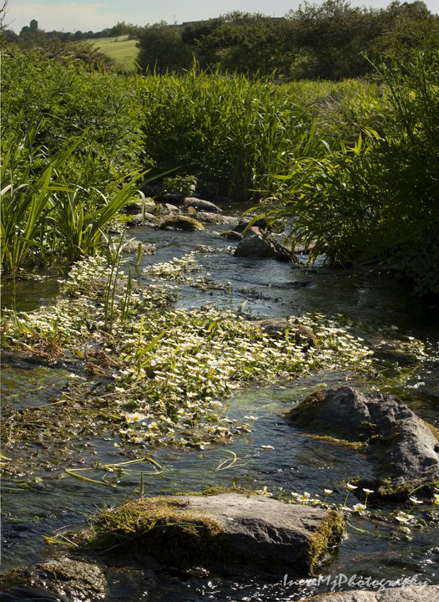 anne river