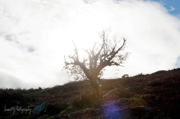 rag tree