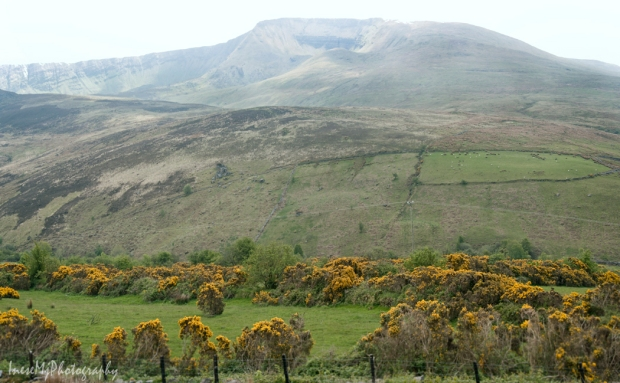 nire valley