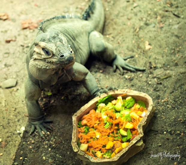 National Reptile Zoo
