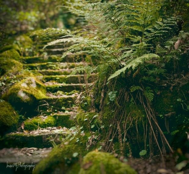 mount congreve gardens