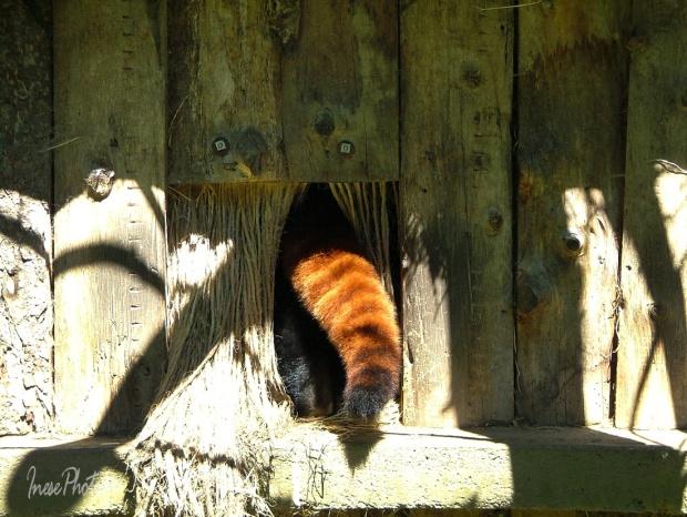 dublin zoo 2007